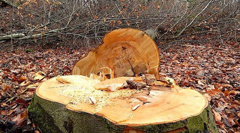 Walddistrikt Dürrbach: Wann wird der Wald aufgeräumt?